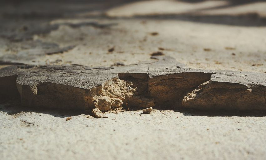 Close-up of wood on sand