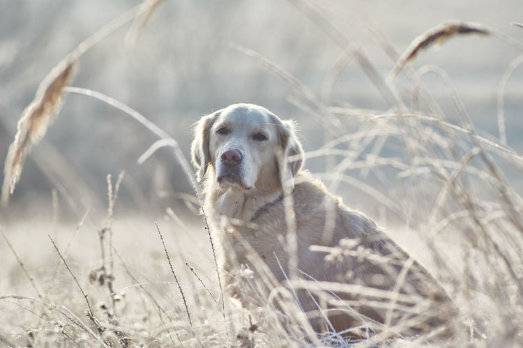 Portrait Of Dog In Grass