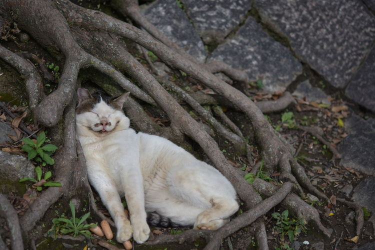 High Angle View Of Cat Resting By Tree