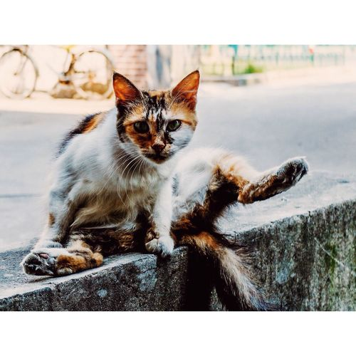 Portrait Of Cat Relaxing On Street