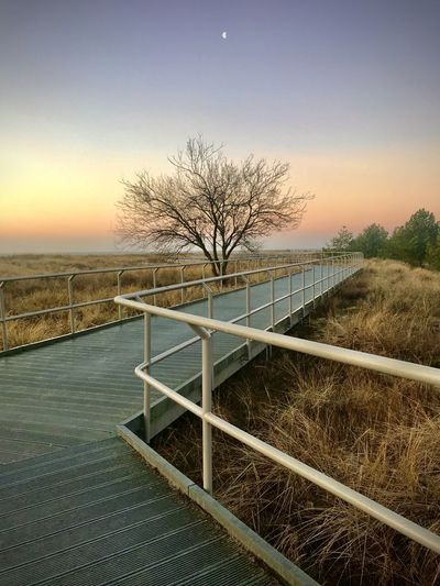 View of bare trees by railing against sky during sunset