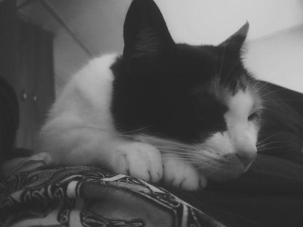 Cat Brilli Time To Sleep Cat World  Cat♡ Catsofinstagram Caturday Cats 🐱 Gato😽 Gata Chilena