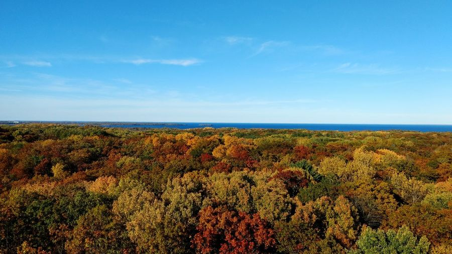 Nature Landscape Ontopoftheworld Birds Eye View Observation Tower Kathio State Park Mille Lacs Lake No People I Can See For Miles Autumn Colors