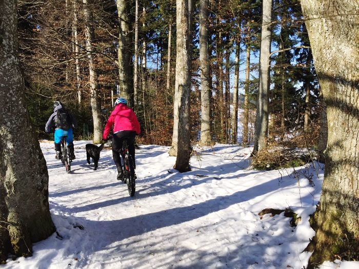 Rear View Of Women Riding Bicycles In Forest
