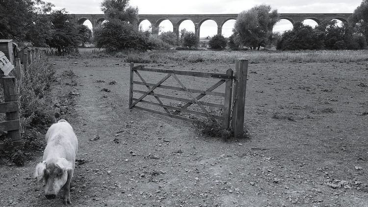 Bridge - Man Made Structure Outdoors Built Structure Architecture Nature Pig Pen Open Disusedrailways Viaduct EyeEmNewHere The Great Outdoors - 2017 EyeEm Awards BYOPaper! Perspectives On Nature Modern Workplace Culture