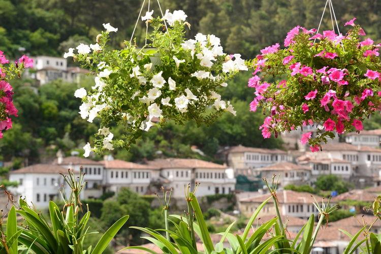 Flowering plants by buildings in city