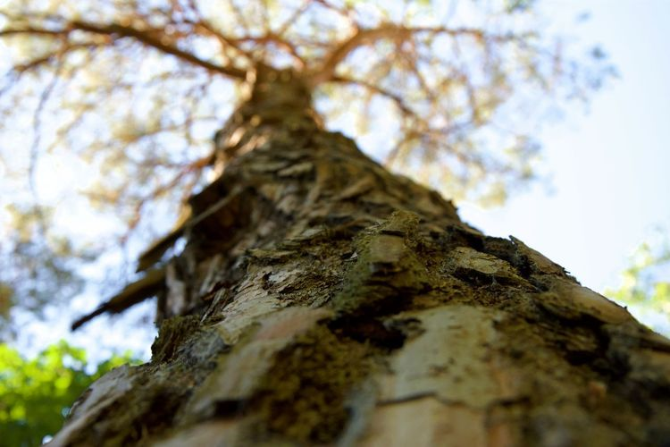EyeEm Best Shots EyeEmNewHere Bark Branch Close-up Day Directly Below Enjoying Life Focus On Foreground Growth Lichen Low Angle View Nature No People Outdoors Plant Plant Bark Rough Selective Focus Sky Textured  Tree Tree Canopy  Tree Trunk Trunk
