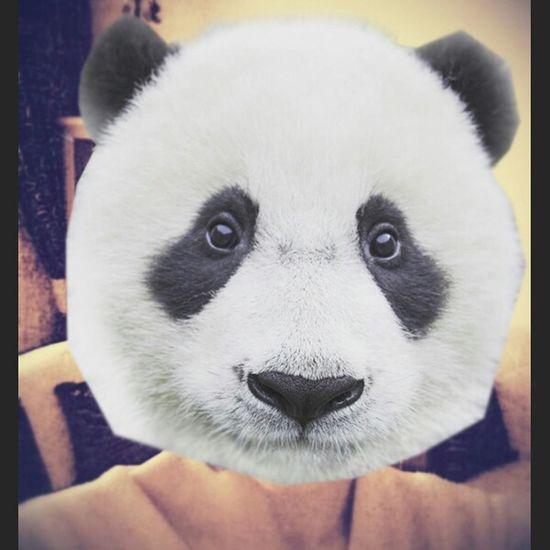 can sıkıntısı panda ne de sevimli ama :) Panda, Black&White, Sweet, 🐼🐼 Pandas PANDA ♡♡ Sexy Panda Panda!