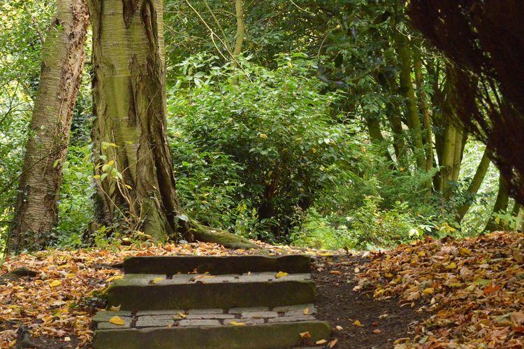 Bowe's museum woods Travel Destinations
