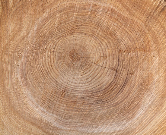 Texture of the annual rings of a tree in close-up Natural Nature Textured  Tree Tree Trunk Wood Abstract Annual Ring Background Brown Close-up Core Cross Section Detail Growth Rings Pattern Resource  Sawed Section Sustainability Sustainable Texture Tree Ring Trunk Wooden