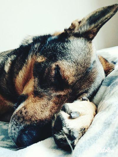 Dog Love First Eyeem Photo Animal Dogyy❤ He Sleeping Good Take Photos Sprig Amaizing Color I LOVE HIM♥