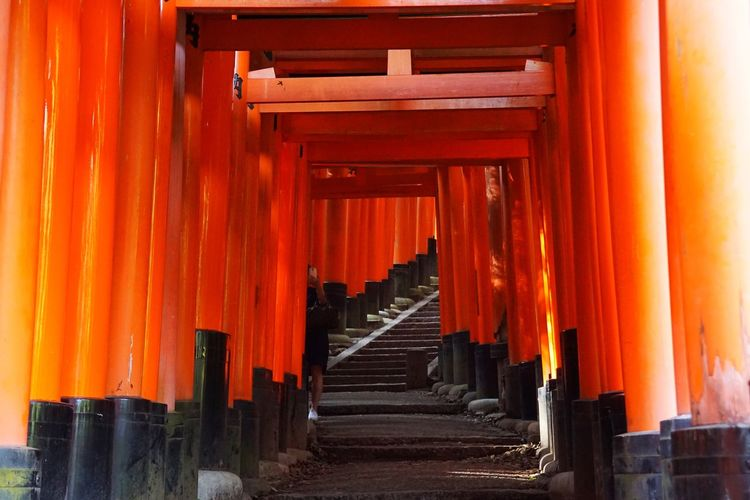 Torii Gates Torii Gate TORII Tori Orange Color Architectural Column Place Of Worship Spirituality Religion Shrine The Way Forward Travel Destinations Travel Tourism Built Structure Architecture
