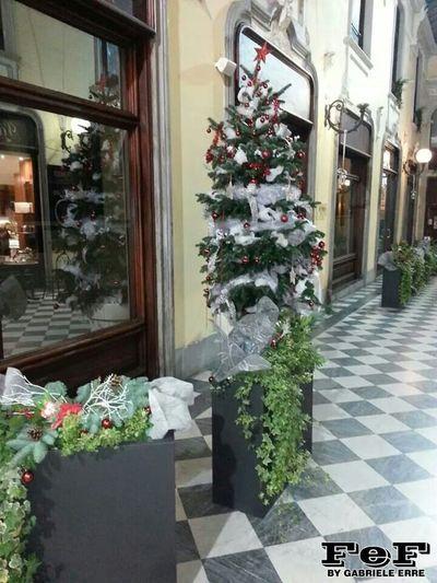 Albero Di Natale Alessandria Galleria