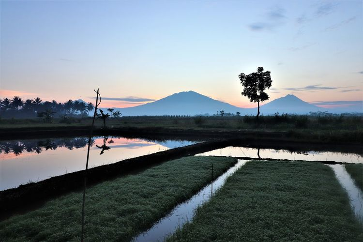 in the foggy morning EyeEmNewHere EyeEm Best Shots EyeEm Nature Lover EyeEm Gallery EyeEm Central Java, Indonesia Water Sky Plant Tranquil Scene Sunset Lake Tranquility Beauty In Nature Scenics - Nature Tree Reflection Mountain Nature Grass No People Non-urban Scene Idyllic Outdoors Landscape