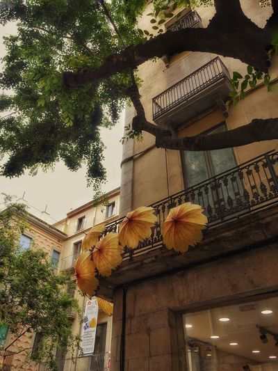 A mi manera https://youtu.be/OzQkX-IZDbQ Girona Temps De Flors 2016 Gironamenamora Gironatempsdeflors From My Point Of View Girona