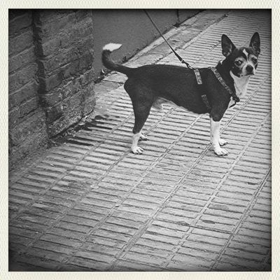 Streetphotography Hipstamatic Dog Duckface Dog