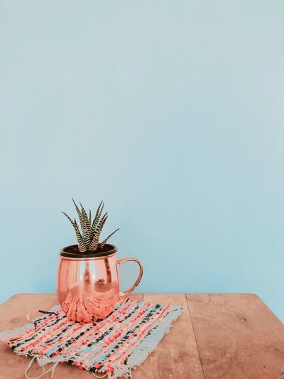 Table Copy Space Indoors  No People Studio Shot Close-up Day Freshness Succulents Succulent Plants SucculentsLover Plants 🌱 Plants Collection Bronze Mug