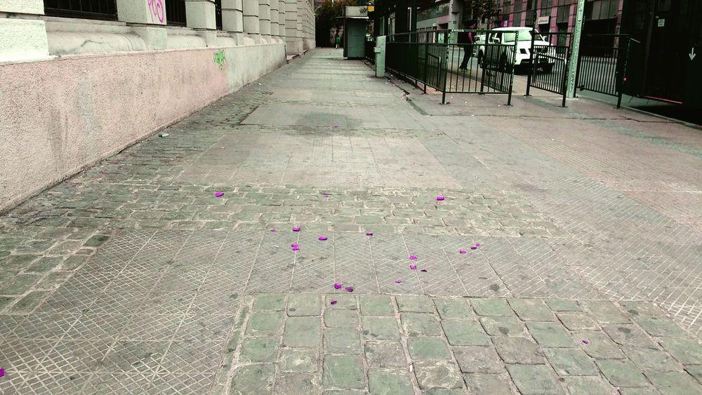 Petalos Flores Street Streetphotography