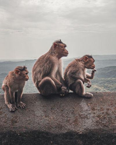 Monkey sitting on the shore