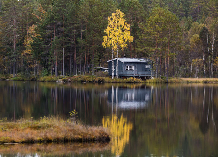 Isolated Cabin Cabin In The Woods Forest Lake Nature Outdoors Reflection Tree Water Woods