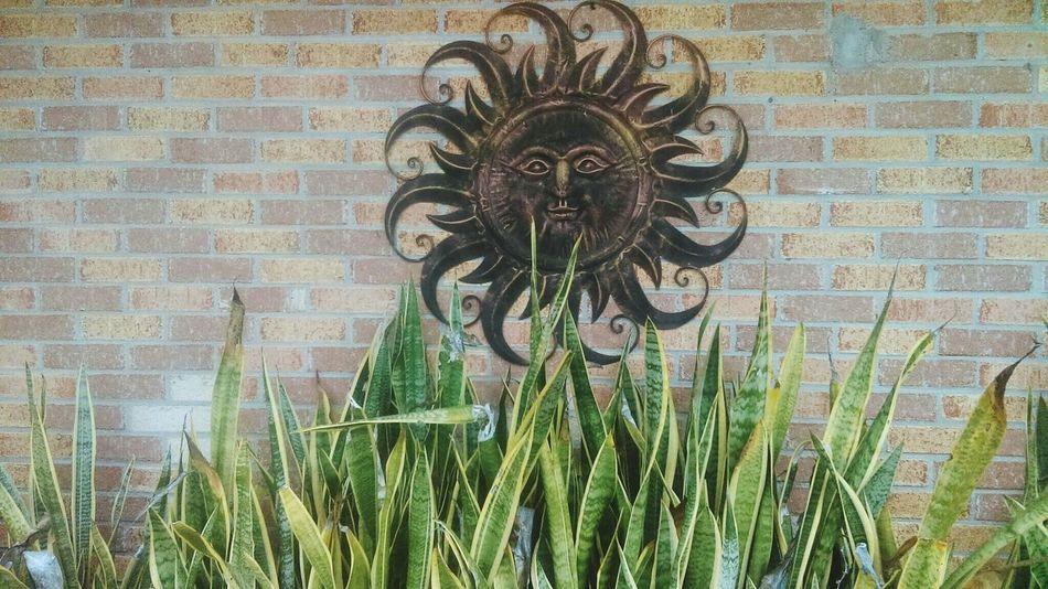 Sun Succulent Brickswork