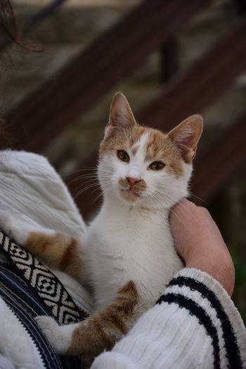 Portrait of kitten on hand