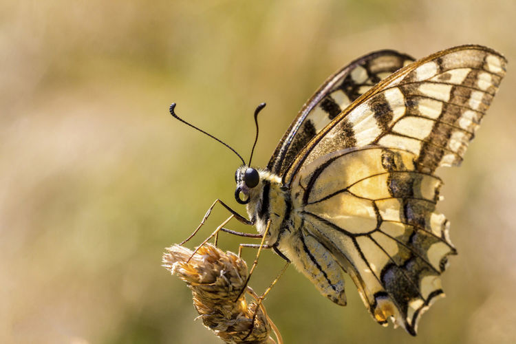 Animal Themes Animals In The Wild Butterflies Butterfly Butterfly Macro Butterfly ❤ Close-up Detail Focus On Foreground Insect Insect Photography Insects  Macro Macro Nature Macro Photography Nature Nature Nature_collection One Animal Selective Focus Summer Wildlife Zoology