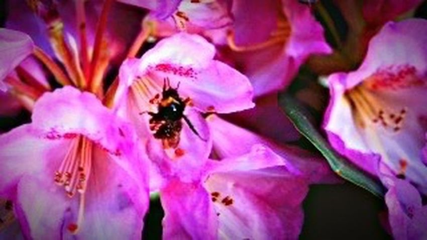 Flower Petal Fragility Insect Beauty In Nature Freshness Flower Head Purple Animals In The Wild One Animal Animal Themes Pollen No People Close-up Bee Growth Outdoors Day Blooming