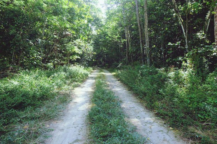 ??rainforest adventures?? Christmasisland Jungle Rainforrest Nature