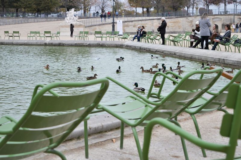 ducks in a pond Ducks Ducks At The Lake Ducks In Water Green Chairs By The Pond Relax In The Park Water Tree Sky Flock Of Birds