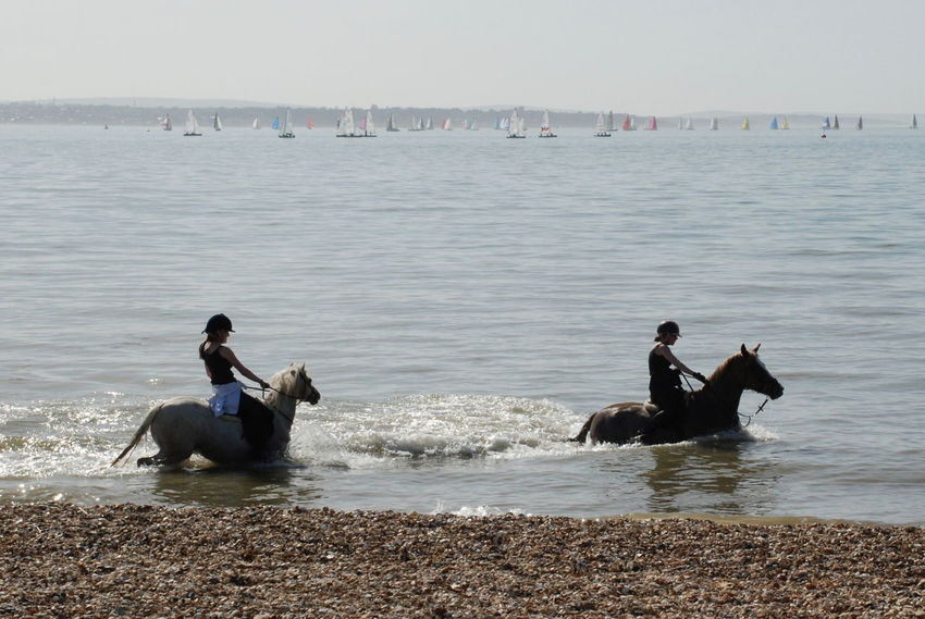 Horse riding in the sea Calm Sea Day Horse Riding Outdoors Sea Silhouettes Water Yachts