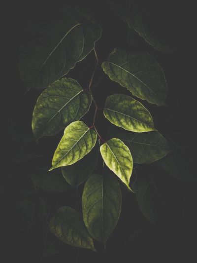 High angle view of leaves against black background