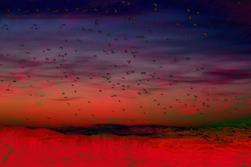 RISEN Colors Fine Art Photography Moody Sky Morning Uprisen Angle Artistic Landscape Beauty In Nature Bird Colorful Colour Of Life Fine Art Flying Landscape No People Risen Sky Sunrise