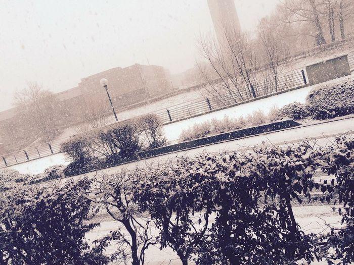 Winter; Snow