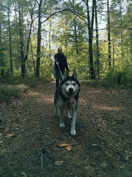 Animal Head  Animal Themes Dog Dogs Dogslife Domestic Animals Forest Husky Husky Love One Animal Pets Walk Walking