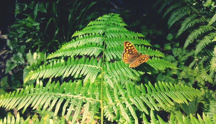 Parque De Serralves, Porto Nature Nature Photography Butterfly