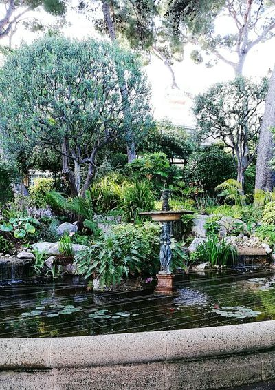 Nature Green Color Plant Tree Water Grass Beauty In Nature Pond Fountain Park Tourism Live For The Story