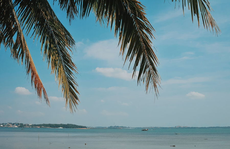 Palm Tree Travel Travel Destinations Travel Photography Traveling PenyengatIsland Bintan  Palm Tree Illustration Art Nature Tree Water Outdoors Sea Beauty In Nature Day Branch Low Angle View No People Sky