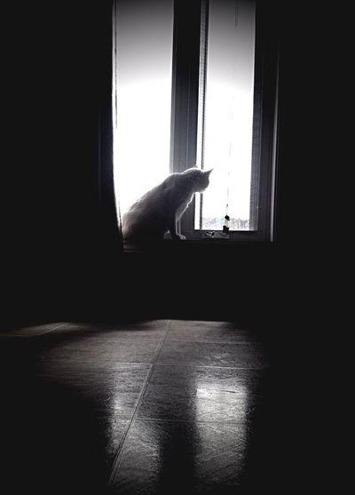 Blackandwhite Cats Black And White Taking Photos