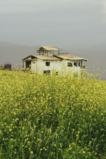 Outdoor Greenery Flowers Yellow Field Abbandoned Cottage Center Composition Roof