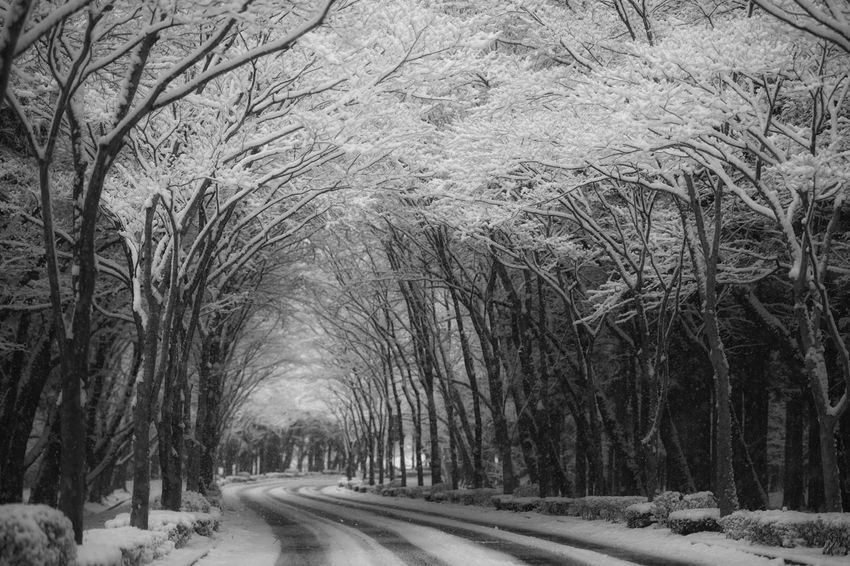 Capture The Moment The Way Forward Depth Beauty In Nature Cold Temperature Snow ❄ Trees Tunnel Winter Nature Fine Art Still Life Tranquility Landscapes Light And Shadow Street Photography Black And White Full Frame Detail Oldlens Zeiss Sonnar EyeEm Best Shots 17_01 The Street Photographer - 2017 EyeEm Awards The Great Outdoors - 2017 EyeEm Awards