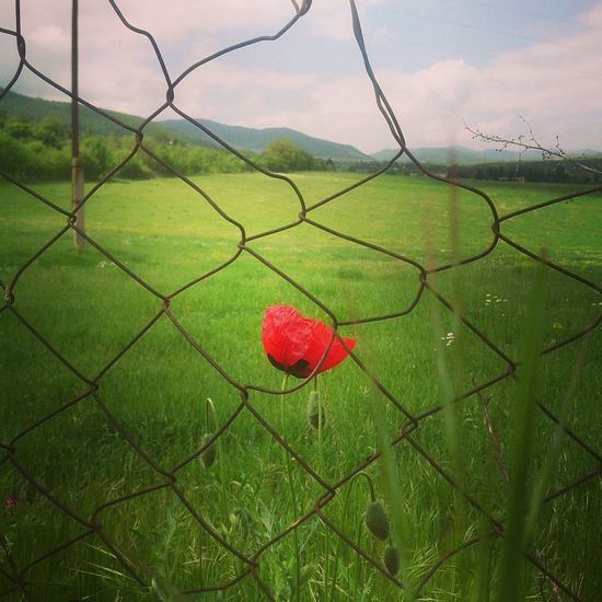 Heart Shape Security Red Chainlink Fence Green Color Protection Nature Grass Growth No People Outdoors Day Beauty In Nature Close-up