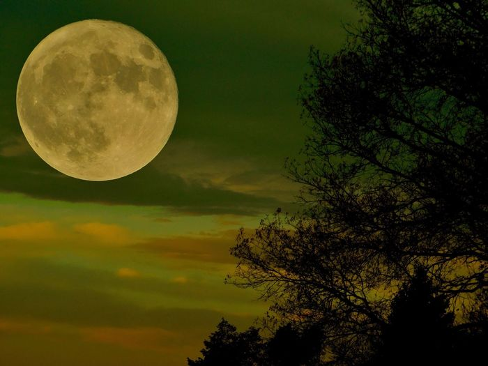 Dec 2017 Moon Beauty In Nature Tree Nature Low Angle View Sky Scenics Tranquil Scene Planetary Moon Night Moon Surface Tranquility Outdoors Astronomy No People Half Moon EyeEmNewHere