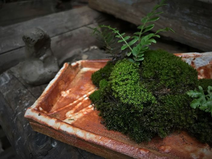 Moss Tray Indoors  gGreen Color