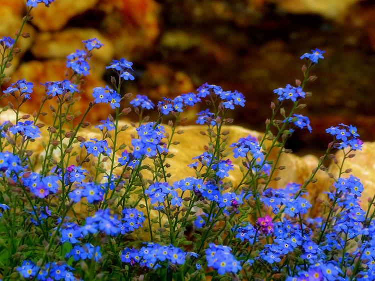 EyeEm EyeEm Nature Lover EyeEm Selects EyeEm Gallery EyeEmNewHere Beauty In Nature Blue Close-up Eye4photography  Flower Flower Head Flowering Plant Freshness Nature Plant Selective Focus Yellow