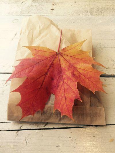 Fallingforyou Nature Colours Changingleaves Fall Beauty Seasons Wonderfulworld Enjoying Life Deceptively Simple
