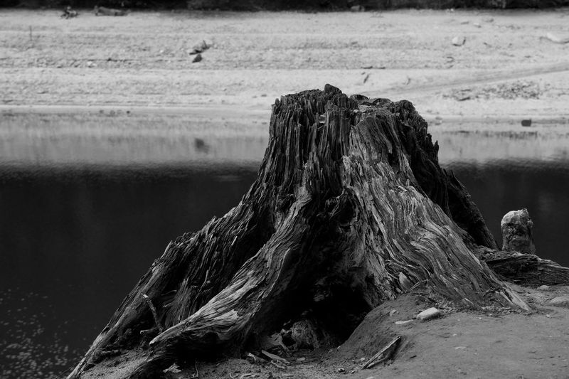 Beach Photography Activity Beach Beachphotography Beauty In Nature Blackandwhite Day Dirt Driftwood Field Focus On Foreground Lake Lake View Land Monochrome monochrome photography Nature No People Non-urban Scene Outdoors Tranquility Tree Water Woods