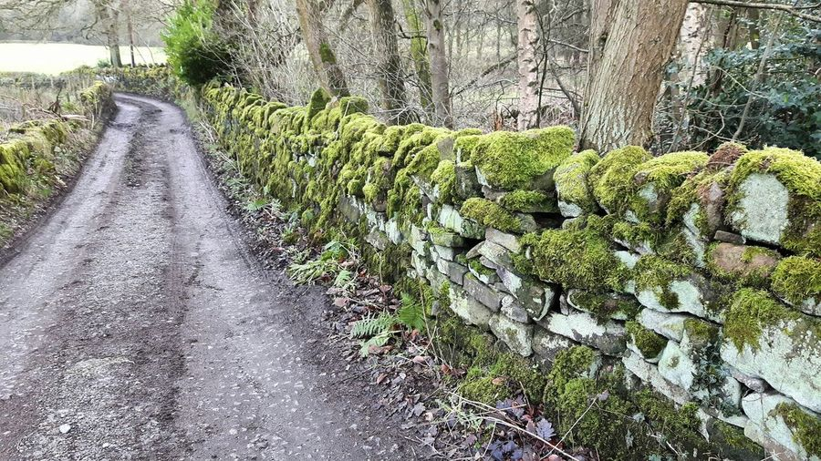 Moss Mossy Mossy Wall Muddy Muddy Puddles Muddy Lane Contry Road Countryside Yorkshire