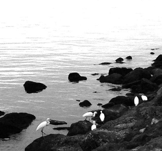 Flocks Rock - Object Outdoors Bird EyeEm Phillippines Eye4photography  Eye4photography  Showcase: February Eyeem Philippines No People Blackandwhite Photography IPhoneography Dawn Of A New Day