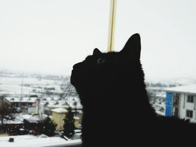 Cat Cat♡ Pet Love Snow ❄ Kedi Aşkı Kedi Kediler Kış Auntum